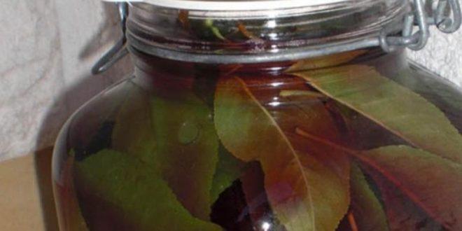 (ФОТО) Лекува и со неверојатна брзина топи килограми: Листовите од ова овошје се волшебни!