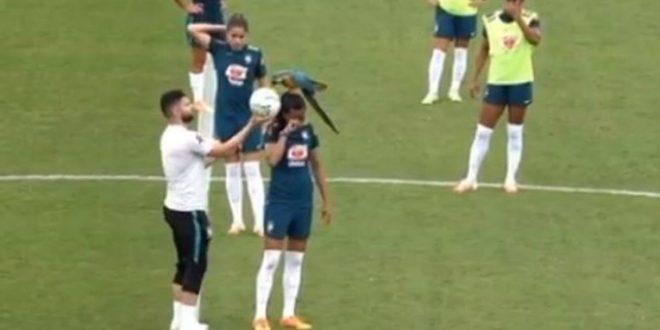 (ВИДЕО+ФОТО) Папагал среде натпревар слетал на глава на играчица и направил хаос