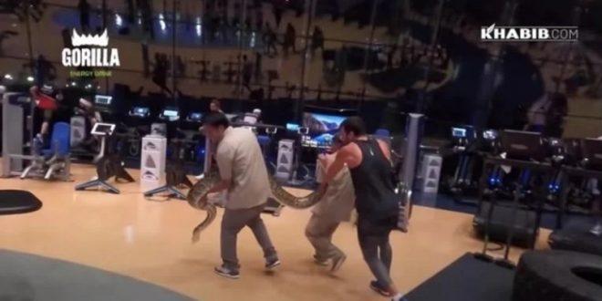 (ВИДЕО) УФЦ светски шампион се исплашил од змија: Претходно се борел со мечки и лавови